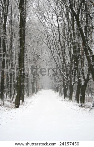 Wintertime in forest. - stock photo