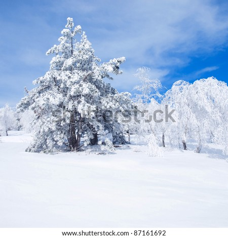 Wintry landscape with snowy trees. - stock photo