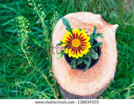 with bright flower petals in a pot on a tree stump - stock photo