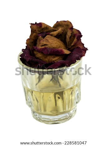 Withered rose in glass with dirty water on white background  - stock photo