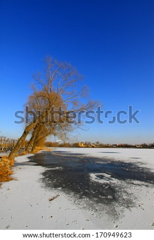 withered tree landscape in the snow, in a water park, North China  - stock photo