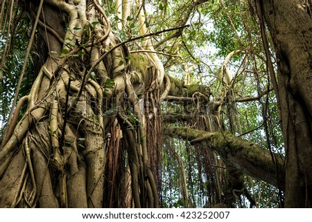 Within the jungle. - stock photo