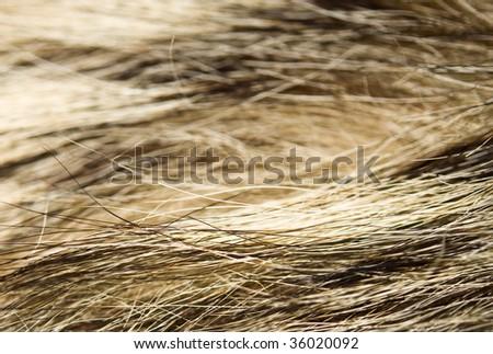 Wolf Fur - stock photo