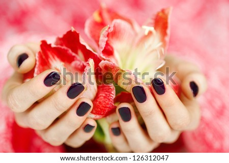 Woman beautiful cupped hands with dark manicure holding red flowers closeup - stock photo