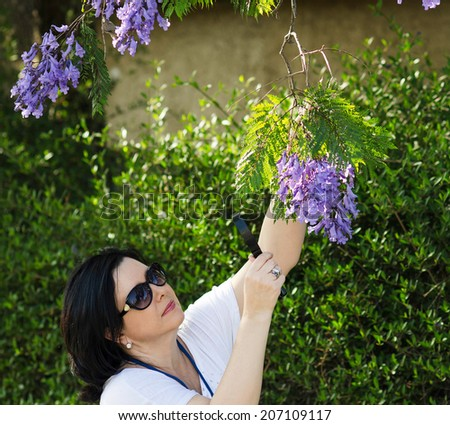 Woman botanist watching the purple flowers on the jacaranda tree with magnifying glass - stock photo