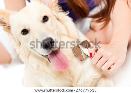 Woman brushing her dog - stock photo