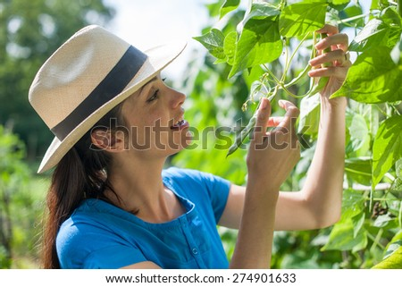 Woman checking on peas in the garden - stock photo