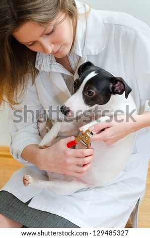 Woman cutting her small dog claws - stock photo