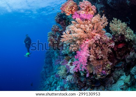 Woman diver enjoys the colors of the reef, St John's, Red Sea, Egypt - stock photo