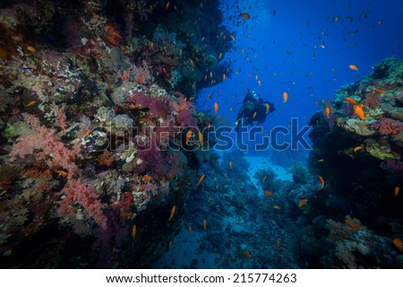 Woman diver explores Dangerous Reef in Egypt's Red Sea - stock photo