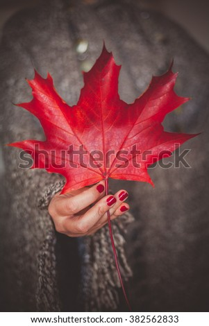 Woman hand holding and showing red dry leaf - stock photo