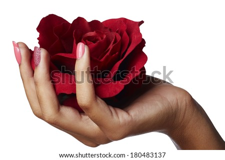 Woman Hand Holding Red Silk Rose. Patel pink manicure. Isolated On White Background - stock photo