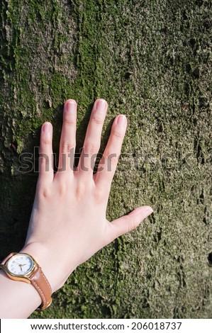 Woman hand touching tree lovingly - stock photo