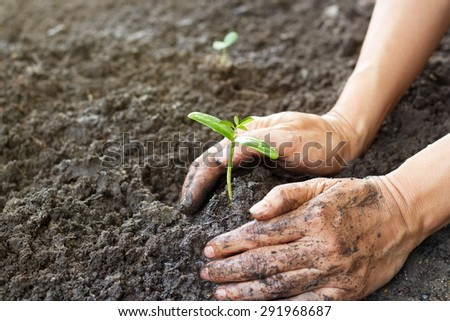 Woman hand watering and protect young tree on soil background ,Ecology concept - stock photo