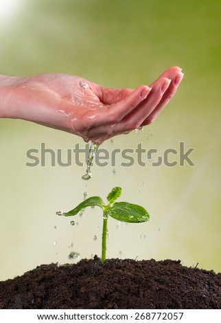 Woman hand watering young plant in pile of soil - stock photo