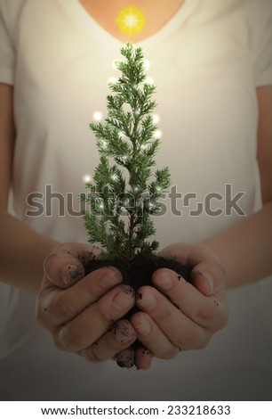 Woman hands hold small christmas tree - stock photo