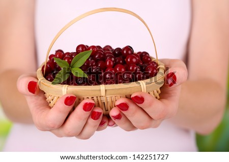 Woman hands holding basket of ripe red cranberries, close up  - stock photo