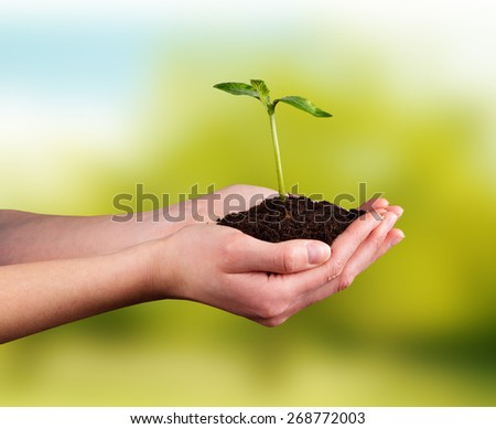Woman hands holding young plant with green leaves. Concept of new life and environment - stock photo