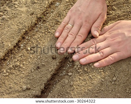 woman hands sowing seeds on tape - stock photo
