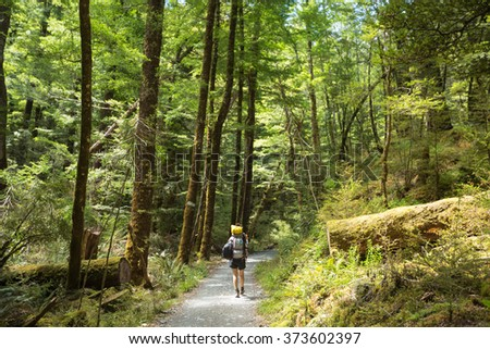 woman hiker with backpack walking in native beech forest on Routeburn Track, New Zealand - stock photo