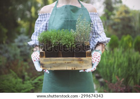 Woman holding a box with plants in her hands in garden center. Close up  - stock photo