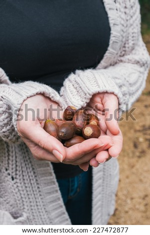 Woman holding acorns in her hands - stock photo