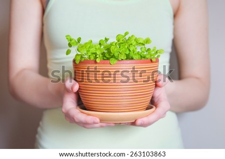 Woman holding flowerpot with sprouts in her hands  - stock photo