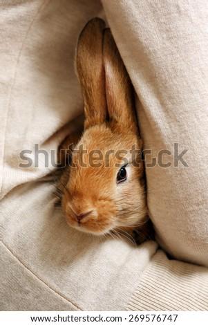 Woman holding little cute rabbit close up - stock photo