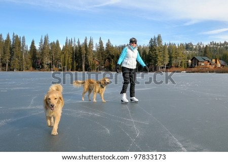 Woman ice skating on lake with her Golden Retrievers - stock photo