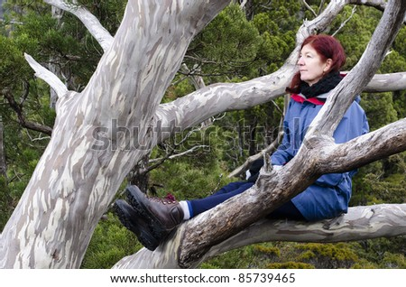 Woman in outdoor jacket sitting in eucalyptus tree. Cradle Mountain, Tasmania, Australia - stock photo