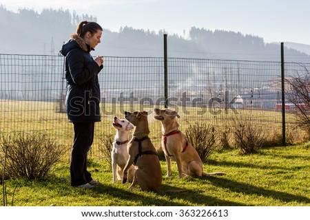 Woman instructing dogs outside - stock photo