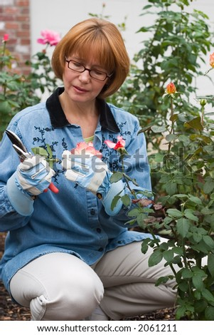 Woman is having good time with her hobby by cutting roses in her garden - stock photo