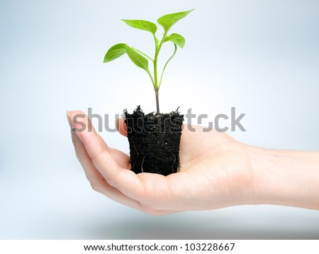 Woman is holding young plant that grows in a lump of soil. - stock photo