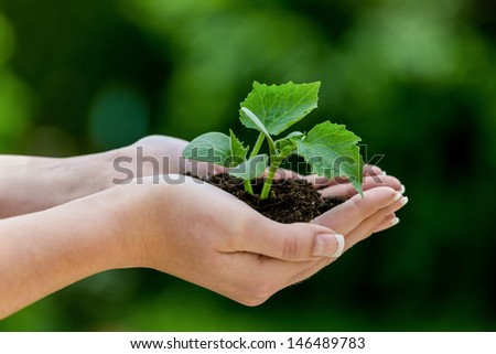 woman keeps plant in hand. symbolic photo for growth and profit - stock photo