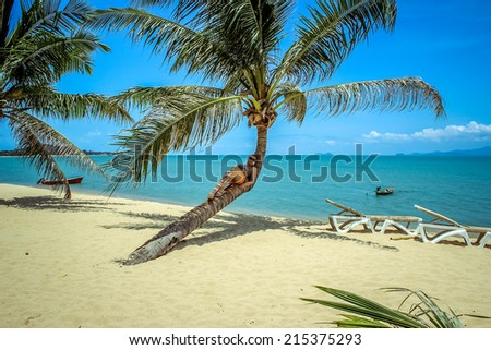 Woman lies on palm at sea background in Koh Samui Maenam beach - stock photo