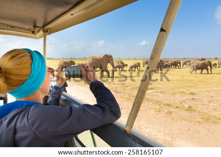 Woman on african wildlife safari. Lady taking a photo of herd of wild african elephants with her smartphone. Open roof safari vehicle. Focus on elephants. - stock photo