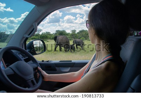 Woman on safari car vacation in South Africa, looking at elephant  - stock photo