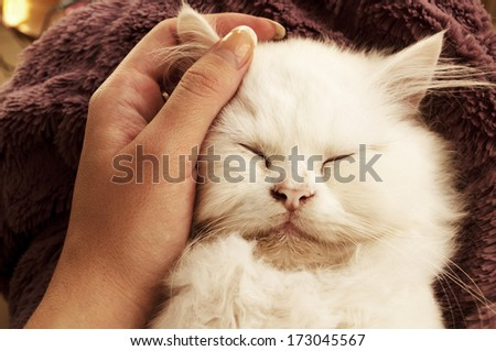 Woman petting adorable white Persian kitten - stock photo