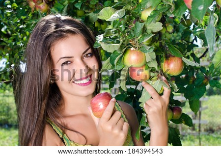 Woman picking a ripe apple from the tree. Apple tree full of ripe organic apples ready to be harvested. Eating healthy fresh fruit. - stock photo