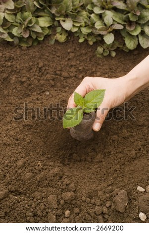 Woman planting a little plant - stock photo
