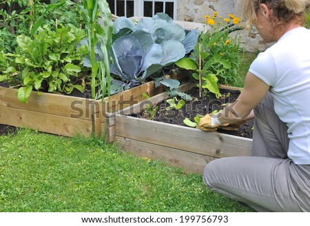 woman planting salad in a small vegetable patch - stock photo