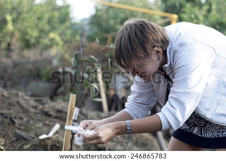 Woman planting seedling of fruit tree in garden - stock photo