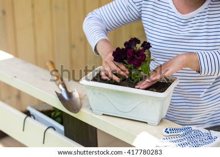Woman planting surfinia/petunia plants into flowerpot - stock photo