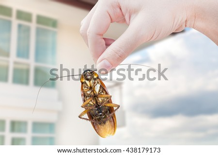 Woman's Hand holding cockroach on apartment background, eliminate cockroach in apartment - stock photo