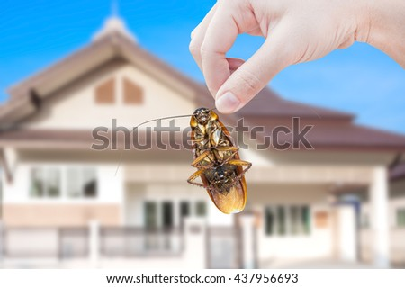 Woman's Hand holding cockroach on house background, eliminate cockroach in house - stock photo