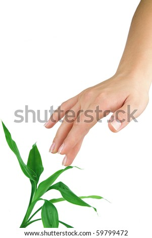 Woman's hand touching green plant - stock photo