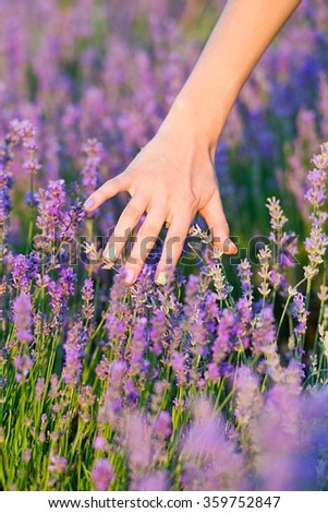 woman's hand touching lavender, feeling nature - stock photo