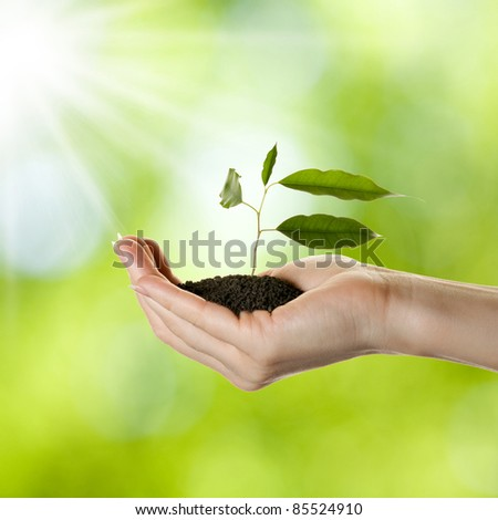 Woman's hand with young plant in soil over nature background - stock photo