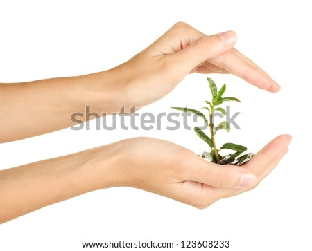 woman's hands are holding a money tree on white background close-up - stock photo
