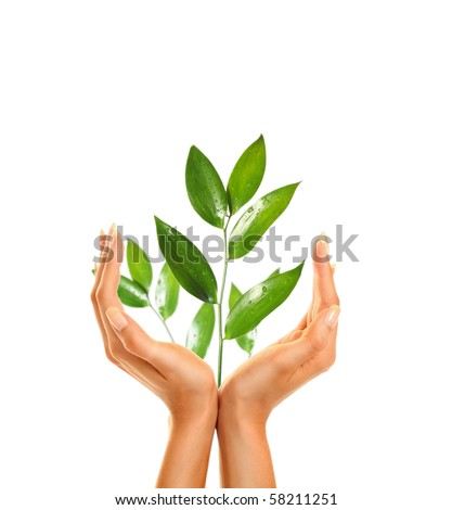 woman's hands holding green leaf - stock photo